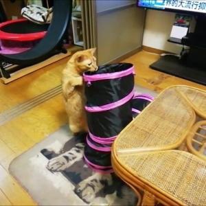 三又トンネルと ネジオモチャ 猫動画