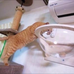 うまうま大作戦 猫動画
