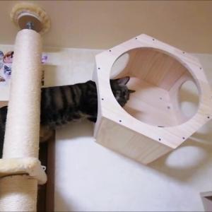 ドームなしで セブン 初IN 猫動画