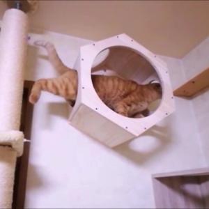 設置後2日目 もう余裕かも~ 猫動画