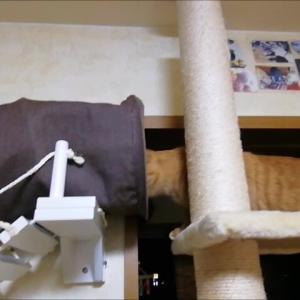 吊り橋 練習 猫動画