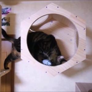 壁箱INの 練習 2 猫動画