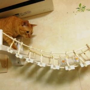 吊り橋チャレンジ ウマウマ作戦 猫動画