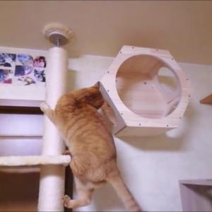 壁箱の位置 変更しました 猫動画