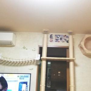 吊り橋 リニューアルオープン 猫動画