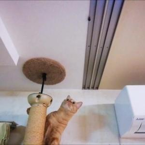 カメムシがいた~ 猫動画
