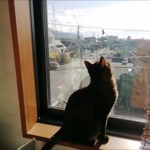 蜂がいた 猫動画