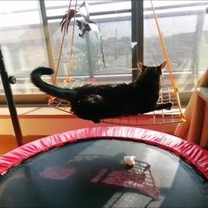 久々のブランコ 猫動画