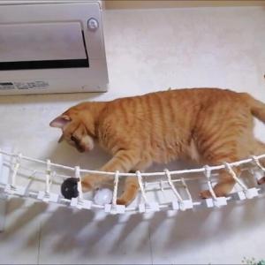 吊り橋 それぞれの成功 猫動画
