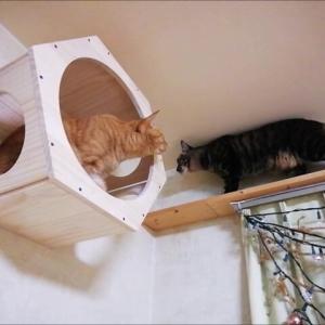 2ニャンで 壁箱・・・か 猫動画