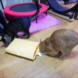 小さな袋 IN 猫動画