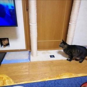 追いかけっこ 猫動画