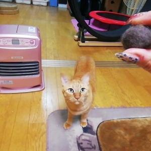 毛玉ボール遊び 猫動画