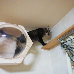 猫道 ご案内 猫動画