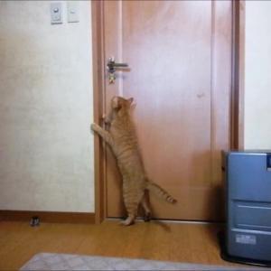 階段の窓へジャンプ 初撮影成功 猫動画