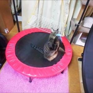 夜のイカ釣り 猫動画