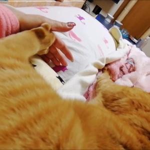 足も モミモミ 猫動画