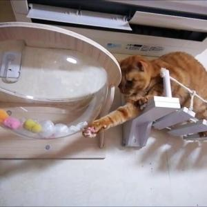 エアコン風でエアーチョイチョイ 猫動画