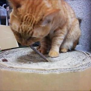 またたびの木 猫動画