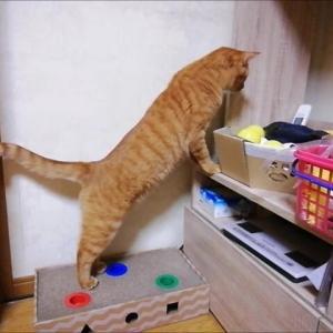 お宝探し エイトの災難 猫動画