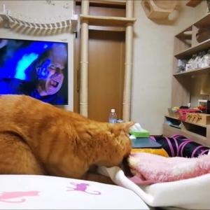 ママ足が出ると・・・ 猫動画