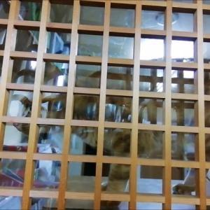 ママ~コール 猫動画