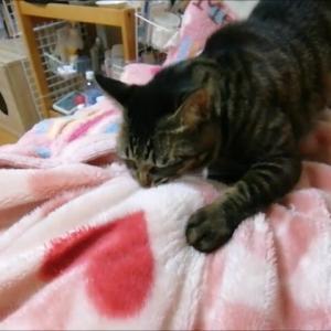 布団が動く 猫動画