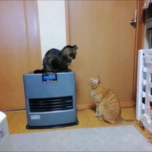 しつこいエイト 猫動画