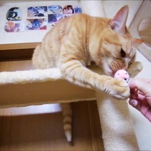 木登りタワー と セブン 猫動画