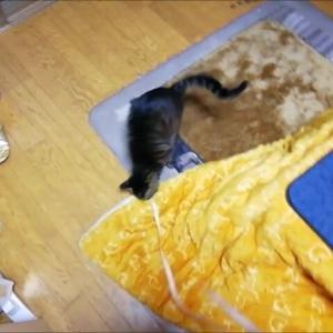 メジャーで猫夜釣り 猫動画