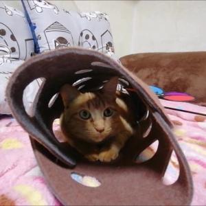 フェルトトンネルとエビ君 コラボ 猫動画