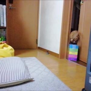 忍者猫 猫動画