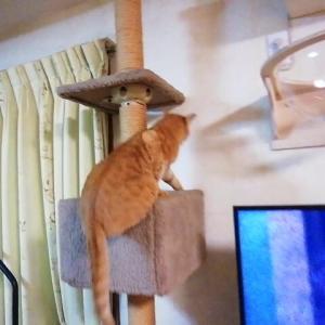 ちょいズルッ 猫動画