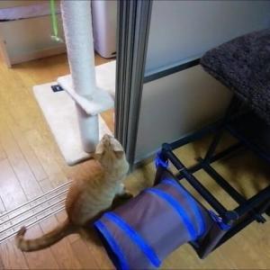 ドアペタ  取れるかなあ 猫動画