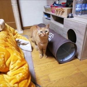 猫トンネル突撃~ 猫動画