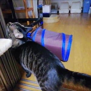 スリスリMAN 猫動画