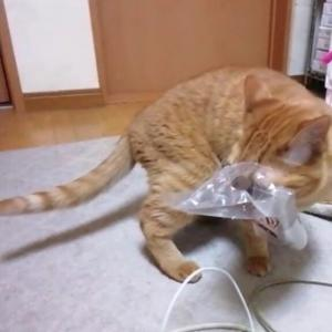 ゴミ箱から持ち出したおやつの袋 猫動画
