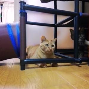 猫用ジャンフルジムで 羽根部品 フリフリ 猫動画