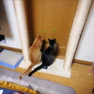 新 壁を滑るボール 猫動画