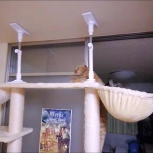 タワーカゴ 右側に入ってると・・猫動画