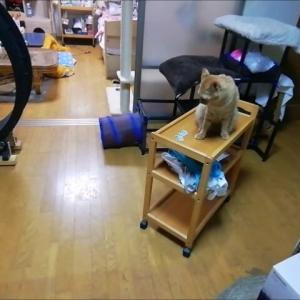 キッチンワゴンのママ遊園地 猫動画