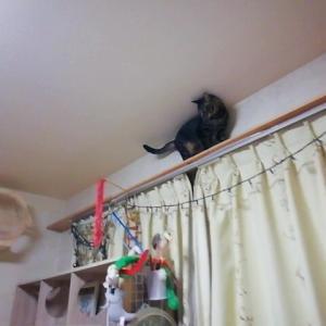 バックオーライ 猫動画