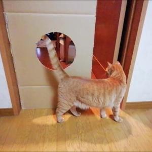 1年ぶりの丸穴ジャンプ 猫動画