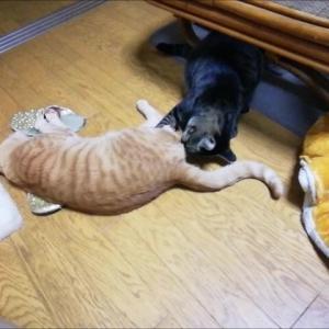 意地悪セブン 降臨 猫動画