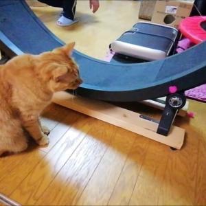マジックボー ペタペタ 猫動画
