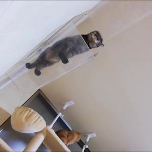 だみ声で文句タレ 猫動画