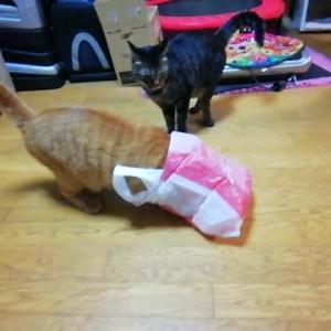 袋と ひよこのオモチャ 猫動画
