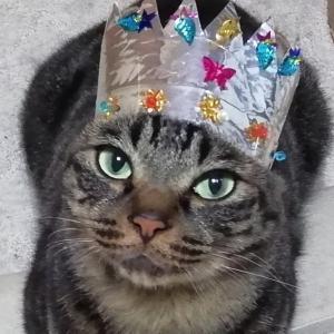 セブン7歳になりました 猫動画