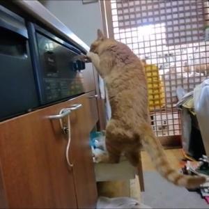 1階キッチンでも 猫動画