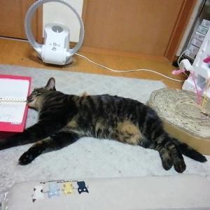 お疲れセブン 猫動画